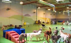 Dog Daycare Centre - Indoor play areas for dogs at Rags and Berts