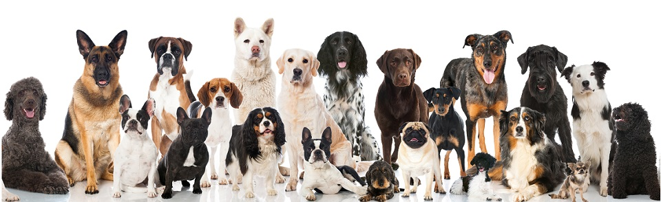 Doggy Day Care & Hotel in Berkshire.  Expert care for your family dog.