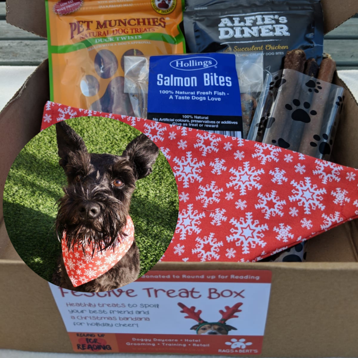small christmas treat box for dogs